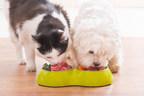 Increasing Demand for Premium Dietary Options Fueling the Global Pet Food Ingredients Market
