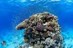 NEOM和OceanX的首次红海探险揭示了深海之谜和生态宝藏