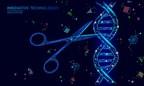 Une technologie CRISPR ultracompacte développée par GenKOre pourrait changer la donne pour la thérapie génique