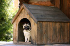 Pet Ownership Soars Among Home Buyers, Influencing Purchase...