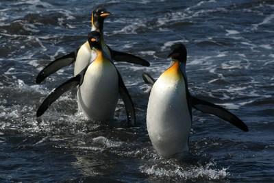 Proteger les eaux autour de Crozet et Kerguelen est capital pour l'equilibre de l'ecosystème marin. (PRNewsFoto/The Pew Charitable Trusts)