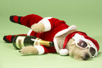 4 Things That Practically Guarantee a Holiday Hangover: USANA's Dr. Dixon Tells You What NOT To Do