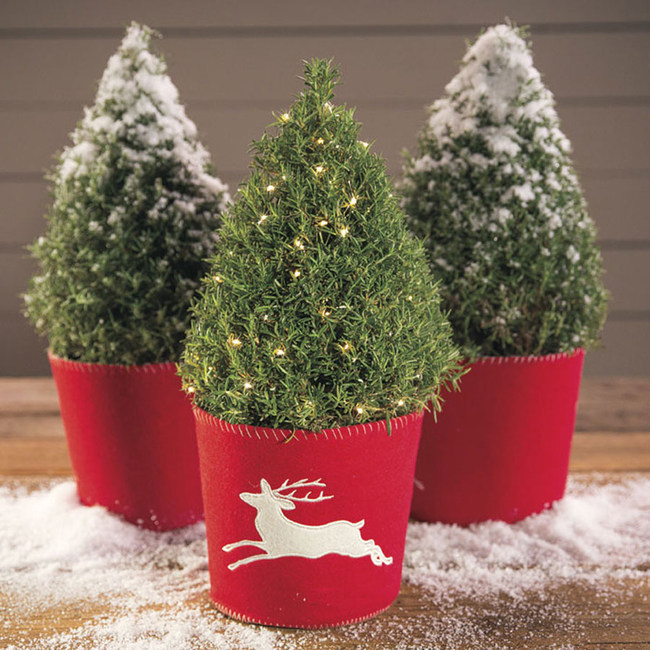 A Fragrant Rosemary Christmas Tree from Jackson & Perkins makes a great holiday gift for chefs and anyone who loves fresh herbs.
