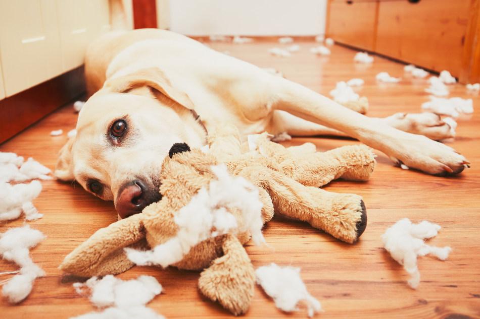 (PRNewsFoto/Healthy Paws Pet Insurance)