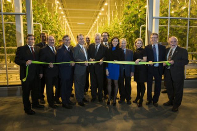 Mission accomplie pour les Serres Toundra - Le plus gros complexe serricole du Québec en production continue 12 mois par année est maintenant réalité (Groupe CNW/Serres Toundra)