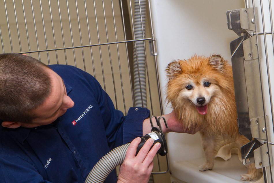 Flagstaff-based Nestle Purina associate, Brodie Core, grooms a dog at Second Chance Center for Animals on Dec. 16, 2016.