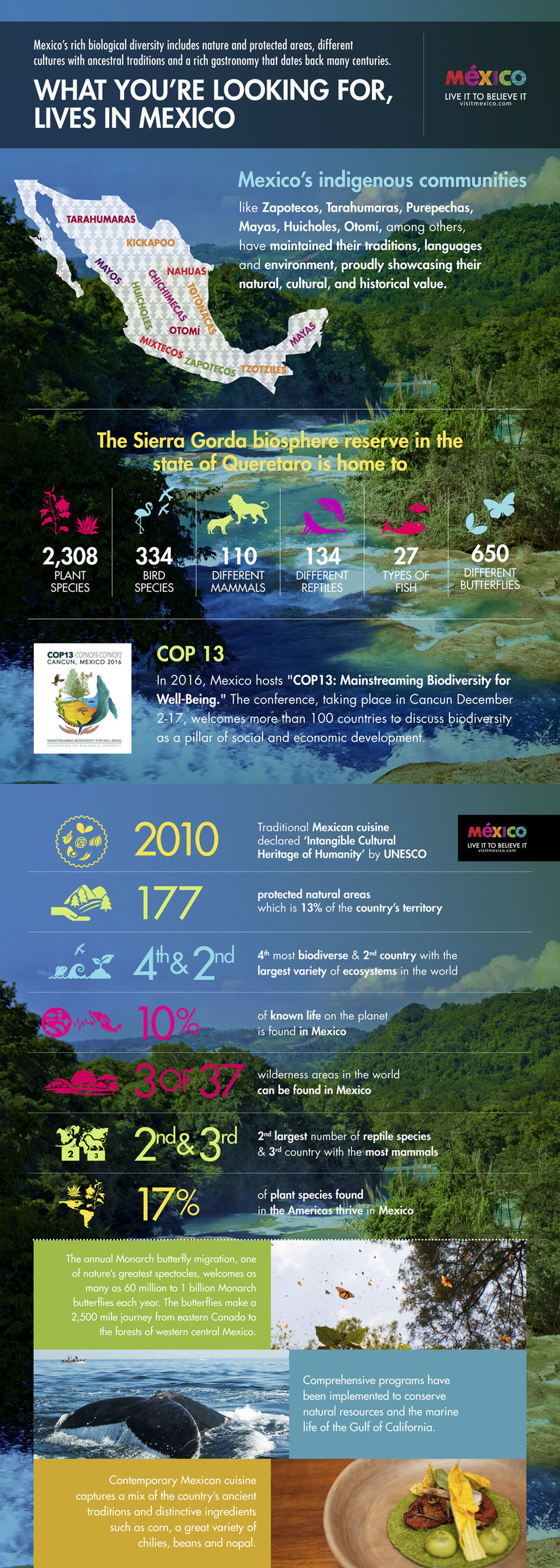 Mexico, for a more sustainable world: 13th Conference of the Parties to the United Nations Convention on Biological Diversity