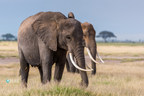 2016: Another fatal year for elephants