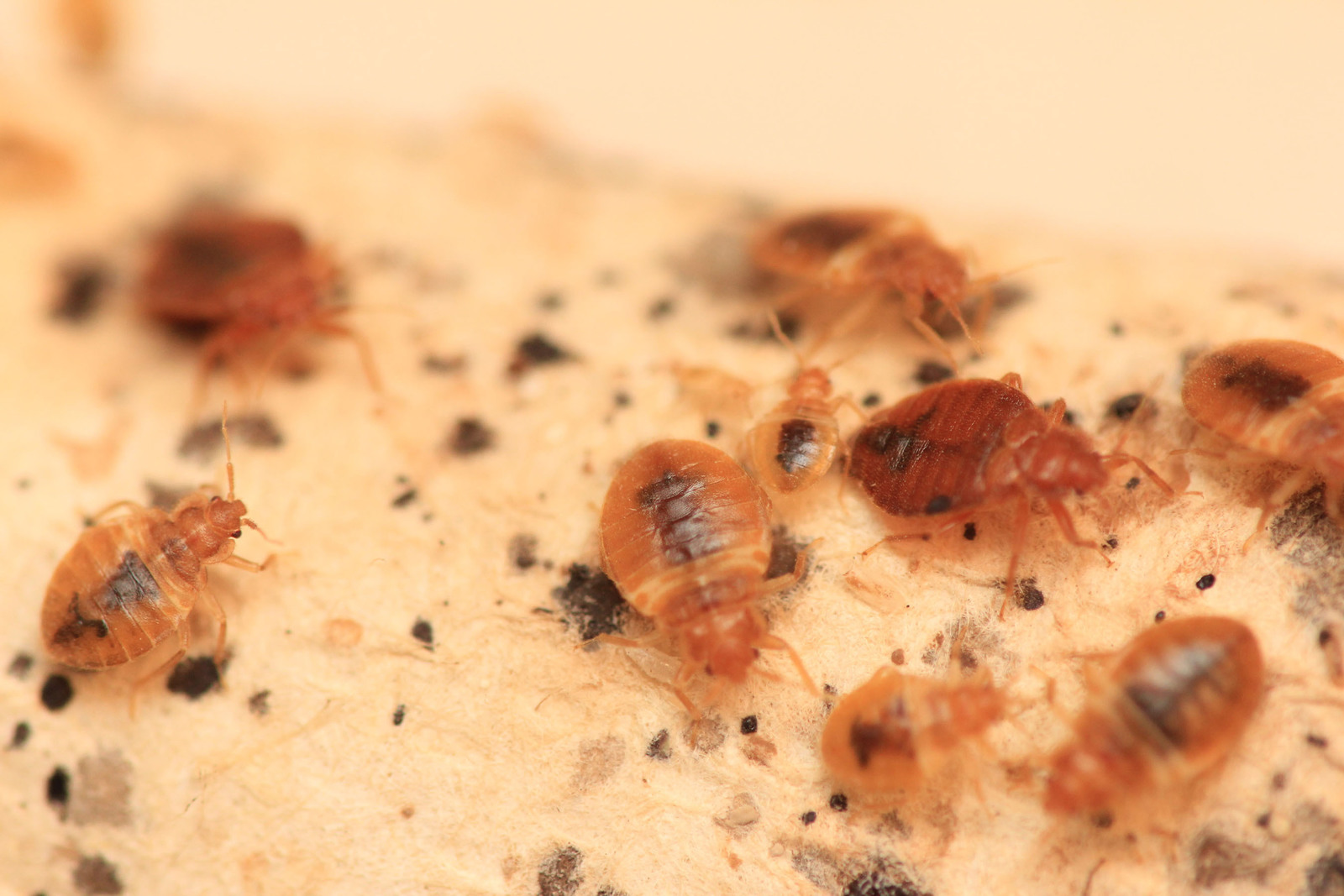 Baltimore tops Orkin's 2017 list of Top 50 Bed Bug Cities. The list is based on Orkin treatment data from Dec. 1, 2015 - Nov. 30, 2016. Orkin's parent company, Rollins, Inc., reports a 10 percent increase in bed bug revenue over the past year. (PRNewsFoto/Orkin, LLC)