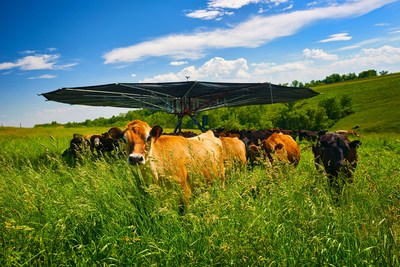 The world's largest mobile shade structure, used for grazing livestock, events, and other commercial applications. Pictured here is the model SH1200 mobile shade. Underneath cattle find relief from the hot summer sun.