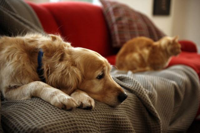 Avec l'âge, nos animaux de compagnie ralentissent leur rythme, dorment plus et deviennent moins actifs. Bien que cette baisse d'intensité soit souvent normale, elle est parfois associée à la douleur causée par l'ostéoarthrose. (Groupe CNW/Institut canadien de la santé animale)