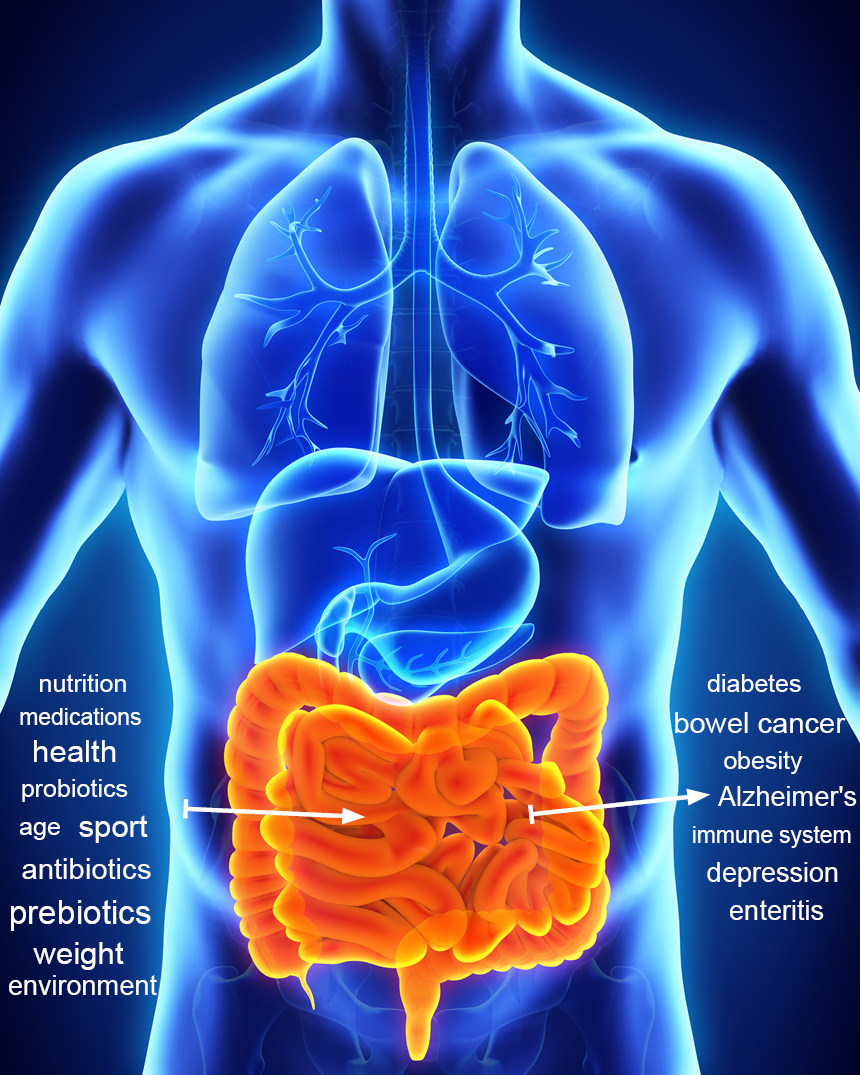 The gut microbiome and its influence on human health could be a new approach for precision medicine. ((C)nerthuz / fotolia) (PRNewsFoto/CeMet GmbH)