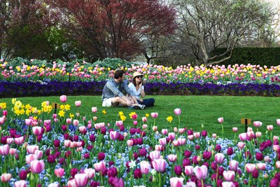 Dallas Arboretum and Botanical Garden presents Dallas Blooms, one of America's best spring floral festivals, themed Peace, Love and Flower Power, showcasing an explosion of color with more than 500,000 spring-blooming blossoms and dazzling landscape.