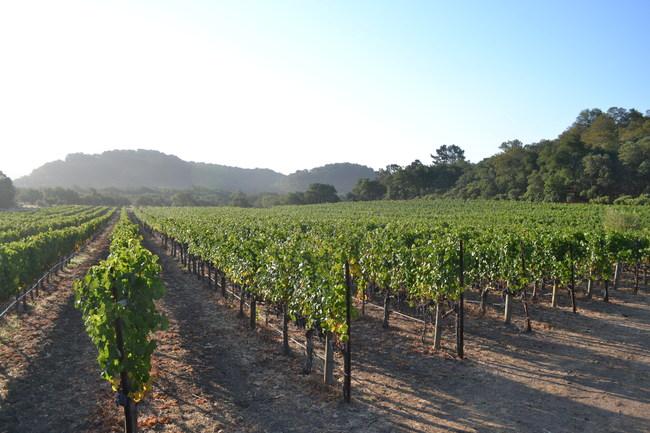 Sill Family Cabernet Sauvignon mountain vineyards