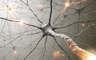 New Feinstein Institute Analysis Details Nervous System's Role in Controlling Immune Function