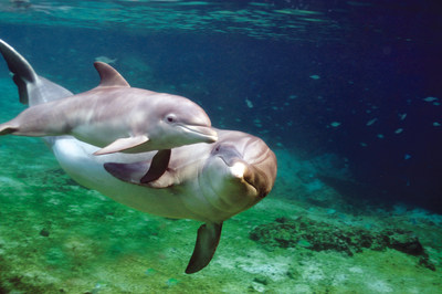 Dolphin Quest In Hawaii, Oahu and Bermuda is now one of fewer than a dozen institutions worldwide to earn the Humane Certified seal from the American Humane Conservation program for exemplary treatment of the animals in its care.