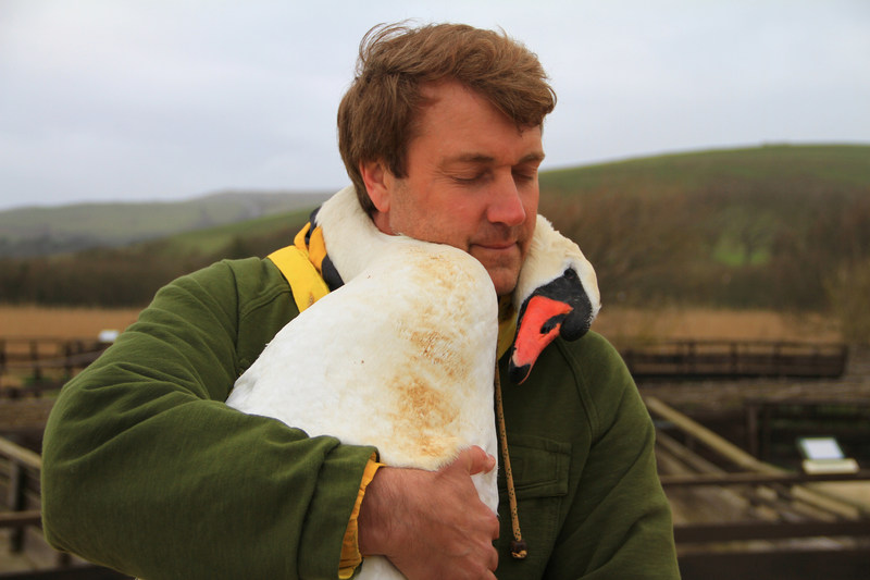 Richard Wiese during an emotional swan rescue in England