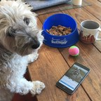 BarkHappy Mobile App for Dog Owners Reaches 60,000 Users; Announces Upcoming Events