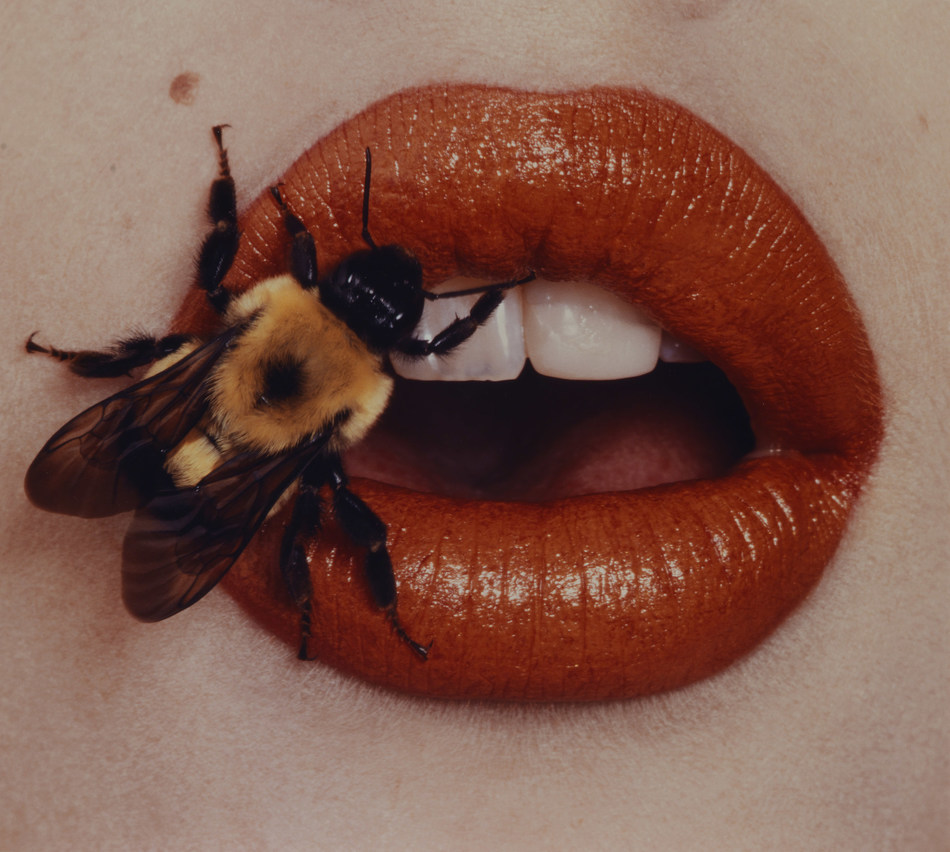 Irving Penn. Bee, New York, 1995, printed 2001. Smithsonian American Art Museum, Gift of The Irving Penn Foundation. (C) The Irving Penn Foundation