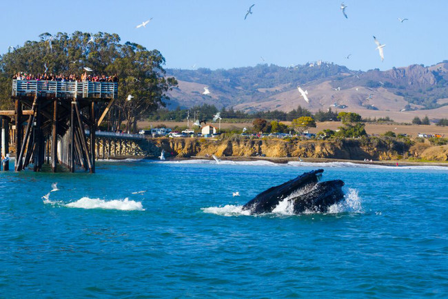The Whale Trail's series of sites where the public may view orcas, other cetaceans and marine mammals includes six new spots along the CA HIghway 1 Discovery Route.