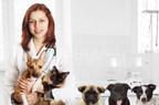 CytoSorbents Launches VetResQ™ for U.S. Veterinary Market