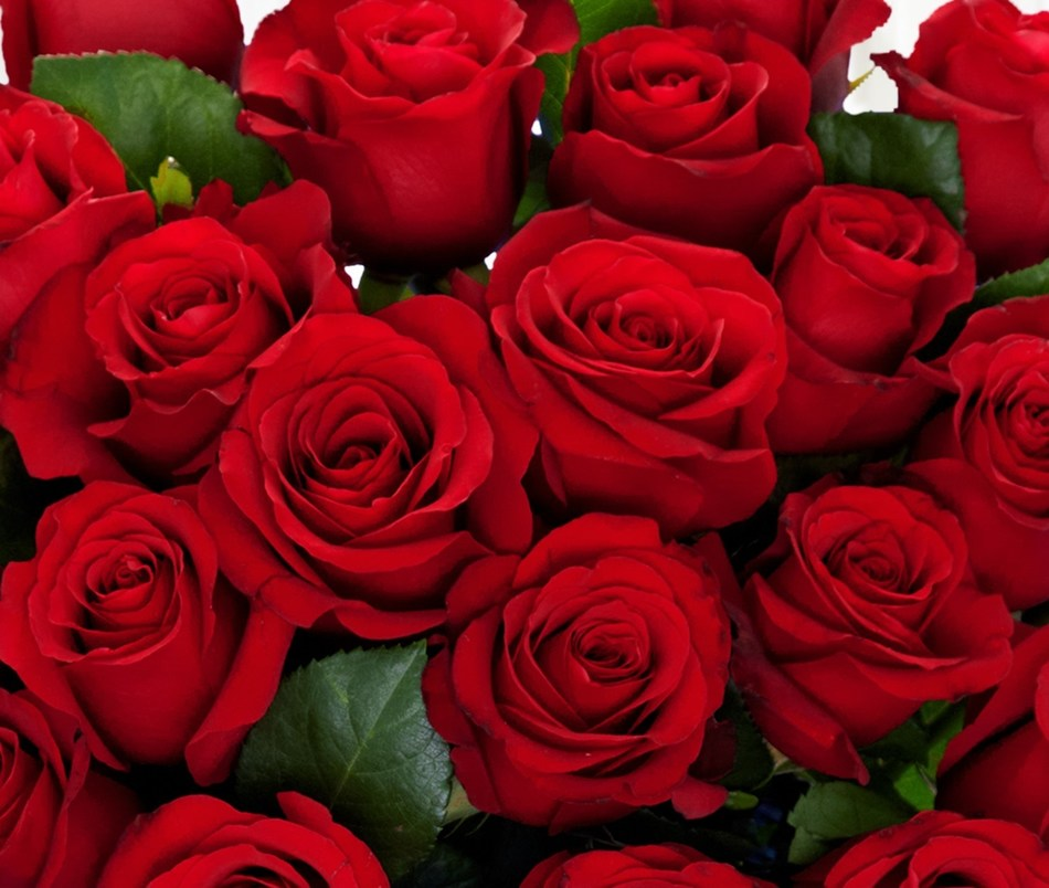 "ProFlowers(R) introduces a new flower subscription service called ProGifter(TM) that allows customers to schedule multiple bouquet deliveries to multiple addresses for up to a year in advance in one quick checkout with free standard shipping and vases.  Customers can choose from an assortment of bouquets including these ""Romantic Red Roses"" for Valentine's Day."