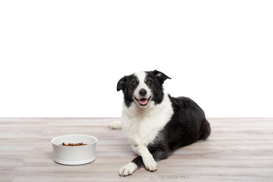 ProBowl tracks a pet's food and water intake, provides feedback on consumption, and alerts pet owners to any changes that are out of the ordinary compared to normal consumption habits.