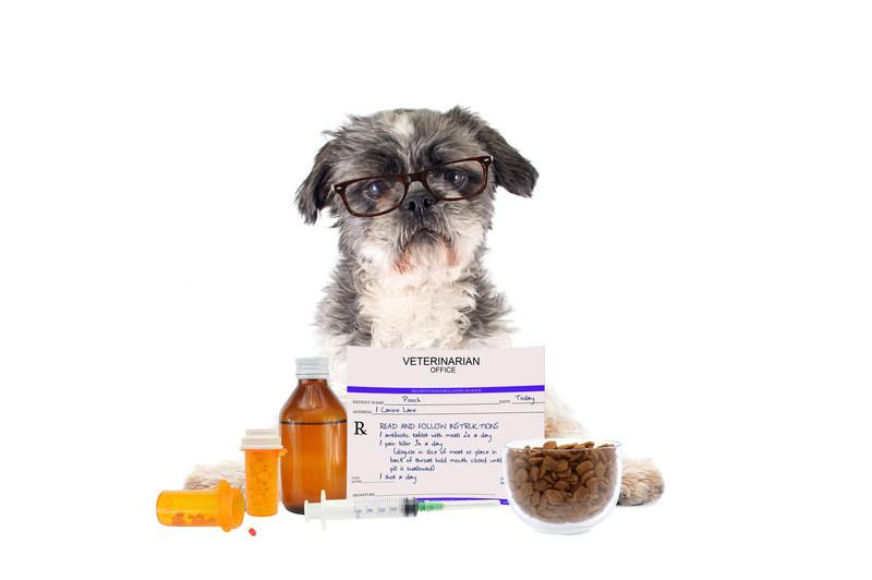 Who Sells Royal Canin Dog Food