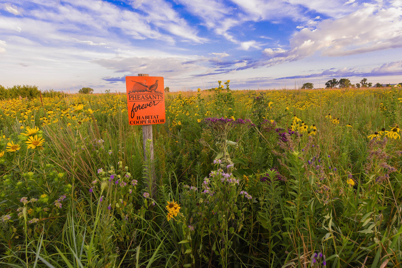Highly diverse habitat projects, such as the one shown here, are critical to future populations of monarch butterflies, honey bees, upland birds, and a host of other wildlife.