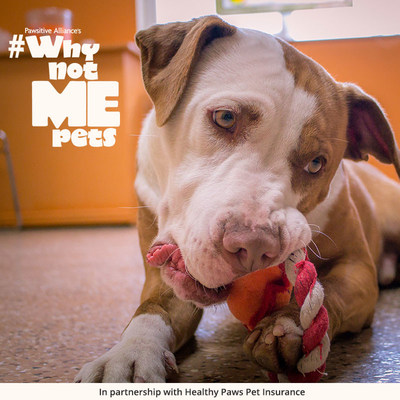 (PRNewsFoto/The Healthy Paws Foundation)