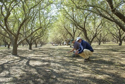 Lawrence Berkeley National Laboratory researchers install sensors in a Stanislaus County almond orchard to better understand its groundwater recharge potential.