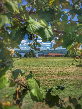 Finger Lakes Winery Invests in New Winemaking Equipment