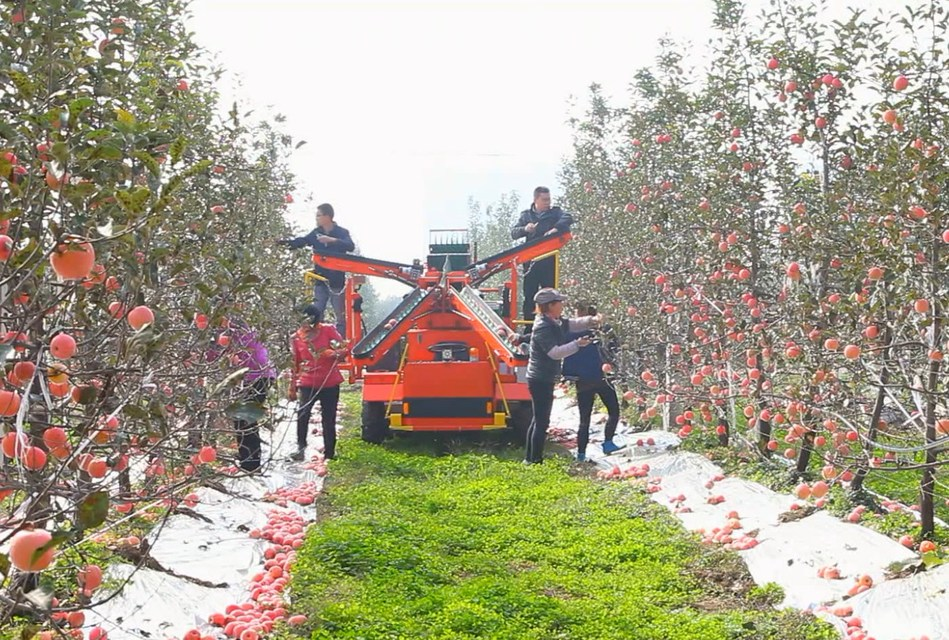 Semi-automatic operation platform for orchards developed by Uni-orange