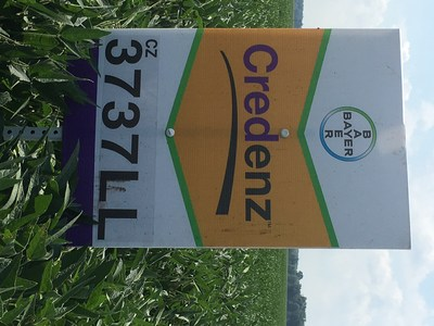 The 2016 University Official Variety Trial (OVT) data showed a 2.2 bu/A yield advantage for Credenz LibertyLink soybeans over Asgrow Roundup Ready 2 Xtend soybeans. The OVT trials included over 500 observations from trials in Iowa, Illinois, Indiana, Lousiana, Michigan and Ohio.