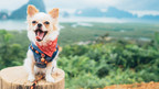 Fuzzy Wants Pet Owners to Brush Up on Pet Dental Health!