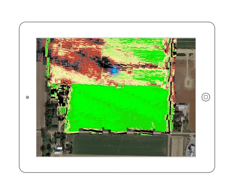 Ground truthing using a QVu Field Health result of winter wheat.  Scout (GPS location shown by blue dot) is near a problem area.