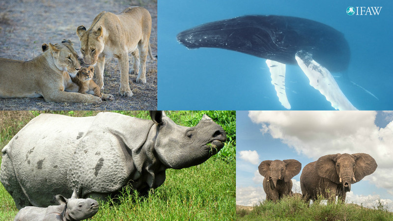 Tackling wildlife trade and empowering youth on World Wildlife Day