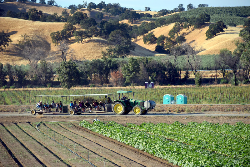 Farm Fresh To You hosts visitors on its Capay Organic farm in Northern California for farm tours and farm festivals. The tractor tram takes guests on a ride around the farm to see crops and wildlife areas.