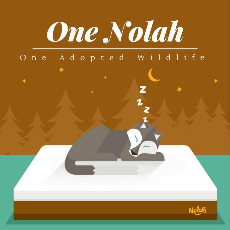 One Nolah = One Adopted Wildlife