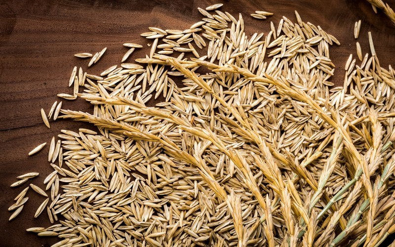Close up of threshed Kernza(R) perennial grain seeds and unthreshed Kernza(R) seed heads.