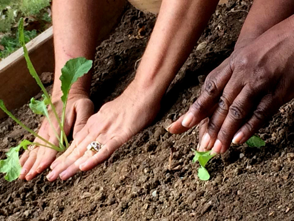 Two participants in Harvest for Health diligently tend to young plants.