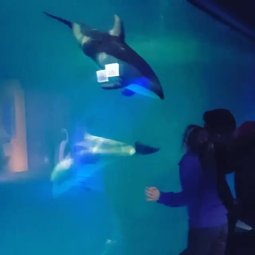 This dolphin captivated children and others during a Wounded Warrior Project overnight event at the Shedd Aquarium in Chicago in 2016. Marquita Pate brought her family to see marine life up close, and connect with other warriors.