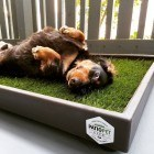 Patio Pet Life Provides An All Natural Potty Solution For