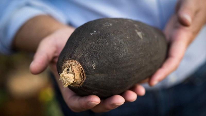 Baobab fruit (courtesy: Kaibae)