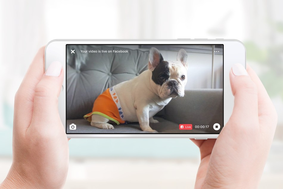 Manny the Frenchie goes live on Facebook via Petcube