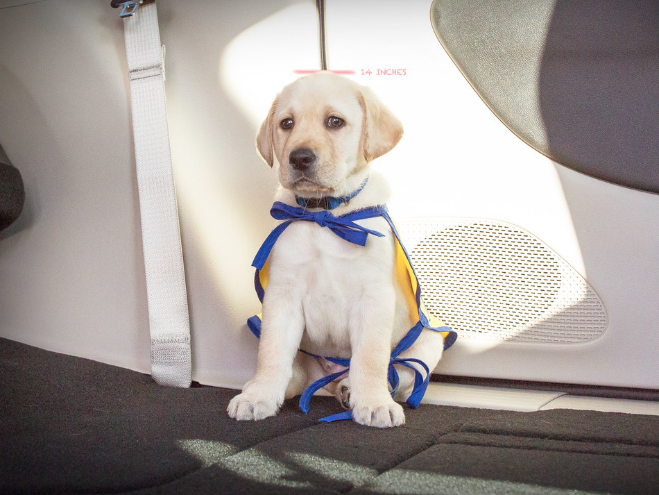 """Chrysler Brand introduces PacifiPuppy Foley to launch its new social initiative in partnership with Canine Companions for Independence's """"Give a Dog a Job"""" campaign."""