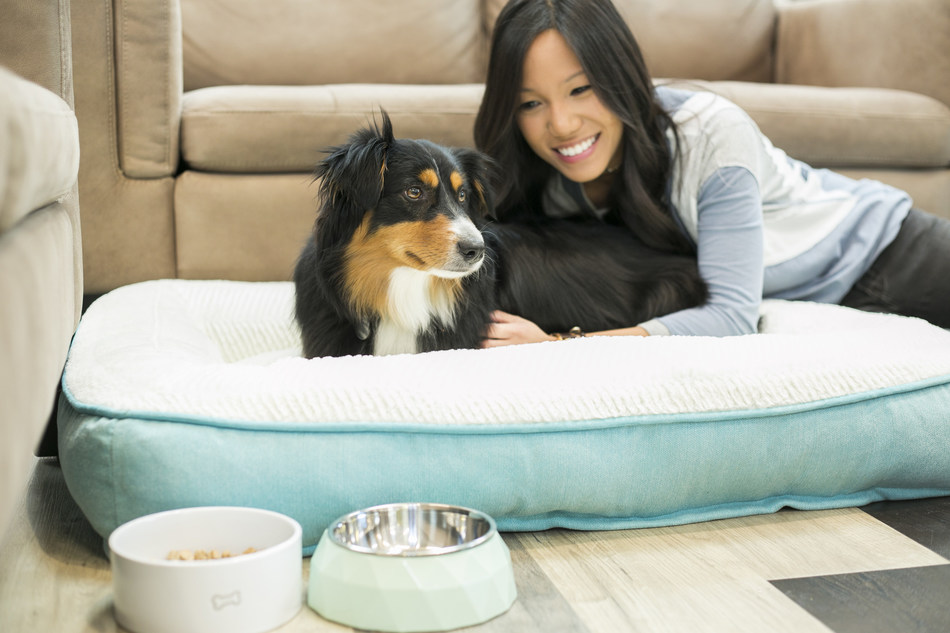 One in five pet parents surveyed by Petco are unaware of how often to replace their pets' toys.