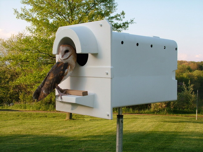 The molded plastic Barn Owl Box, found to resist Africanized honeybees, allows various cavity nesting birds safer breeding sites.