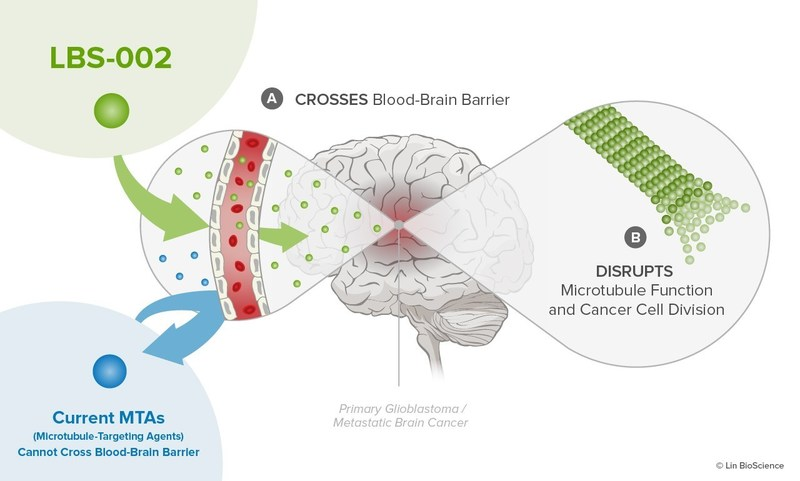 LBS-002's ability to cross the blood-brain barrier shows promise for treating both primary and metastatic brain cancers