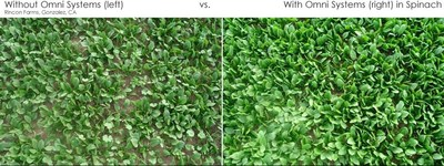 35% More Spinach Yield With HDMR